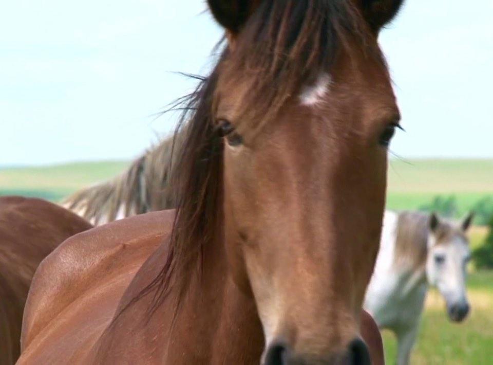 houd jouw paard gezond met halozout therapie