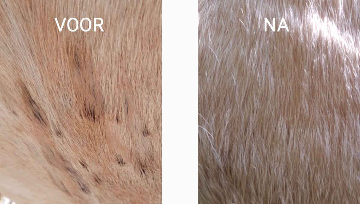 voor en na de behandeling met halozout